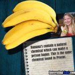 banana-fact